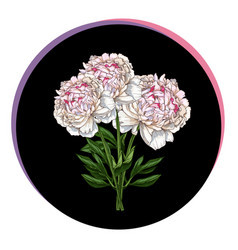 Three beautiful peony flower in a black circle vector