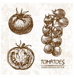digital detailed tomatoes hand drawn vector image vector image