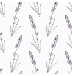 Hand drawn lavender branch and flowers outline vector image