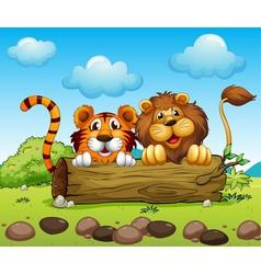 A lion and tiger hiding vector