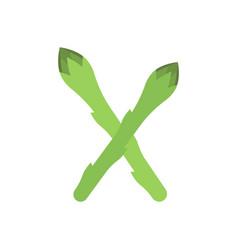 asparagus vector image