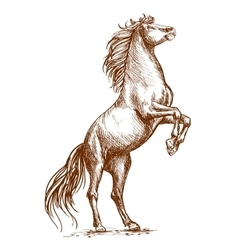 Brown horse rearing on hind hoof sketch portrait vector