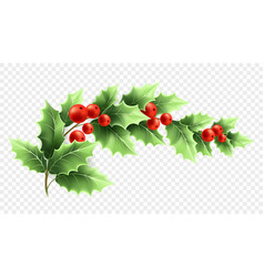 Christmas holly branch realistic vector