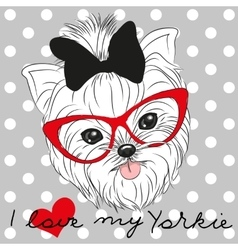 Cute Yorkshire Terrier vector