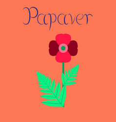 Flat on background flower papaver vector