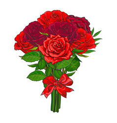 hand drawn red roses bouquet vector image