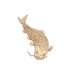 koi nishikigoi carp diving down drawing vector image