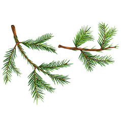 set of spruce branches vector image