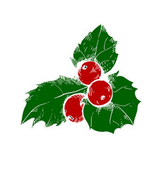 sketch of christmas holly berry vector image