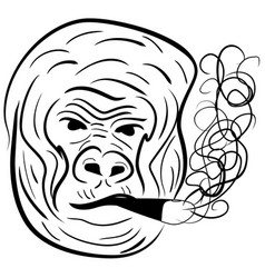 gorilla portrait - hand line drawing vector image