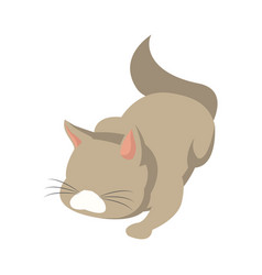 cat animal pet adorable domestic vector image