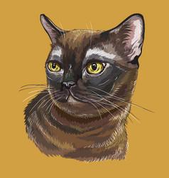 colorful burmese cat vector image