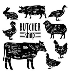cut of animals meat diagram for butcher meat cut vector image