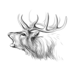 deer sketch artistic black-and-white portrait vector image