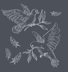 Doves or pigeons with olive branches sketch vector