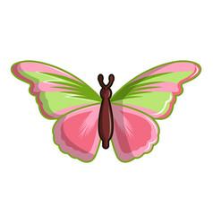 Esmeralda butterfly icon cartoon style vector