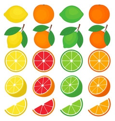 Citrus Set vector image