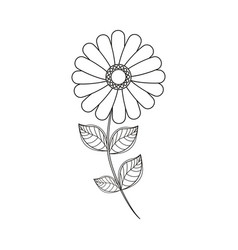 flower daisy floral decoration line vector image vector image