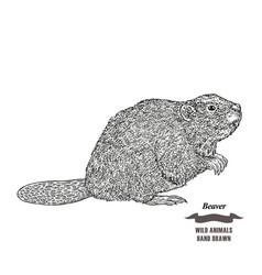 forest animal beaver hand drawn black ink sketch vector image