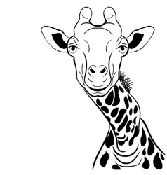 a graphical image giraffe head ink sketch vector image