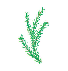 Christmas fir tree branch isolated on white vector