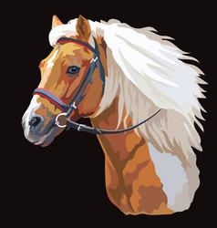 Colorful horse portrait 21 vector