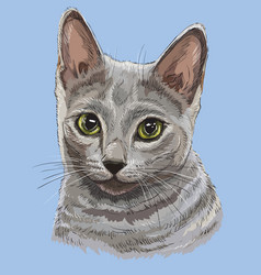 Colorful russian blue cat vector