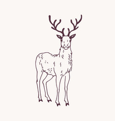 elegant drawing standing male deer reindeer vector image