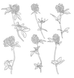 Set of drawing clover flowers vector