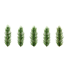 set of realistic spruce or pine branch leaf vector image