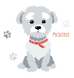 sketch funny maltese dog sitting vector image