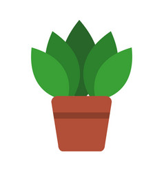 potted plant flora green decoration interior vector image