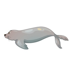Seal fish vector
