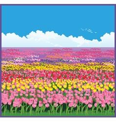 field of tulips vector image