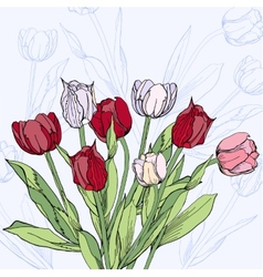 Background with claret and white tulips vector image