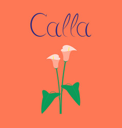 Flat on background flower calla vector