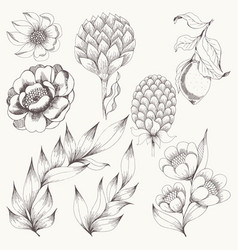 Flower set hand drawing vector