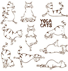 Funny sketch cat doing yoga position vector