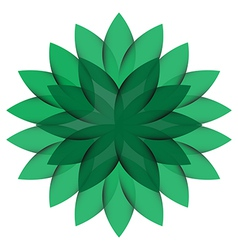 Green Wheel Flower isolated vector