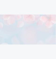 sakura petal pink background spring vector image