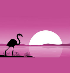 collection flamingo scenery at sunset vector image vector image