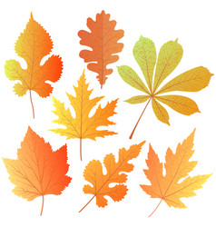 A set of autumn leaves element decor for the vector