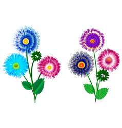 A set of bouquets aster with buds vector