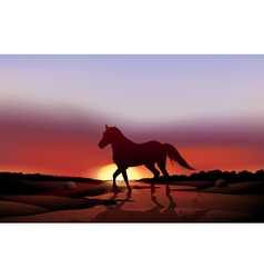 A sunset at the desert with a horse vector image