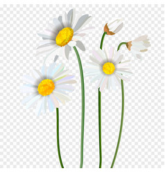 chamomile flower seamless pattern with vector image