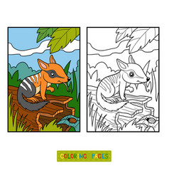 coloring book for children numbat vector image