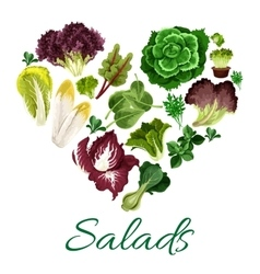 Green leafy vegetables in shape a heart vector