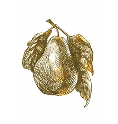Nature pear vector