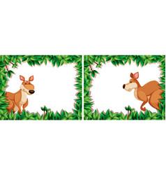 set of kangaroo in nature frame vector image