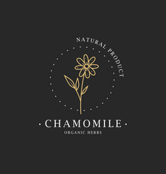 chamomile flower logo for spa and beauty salon vector image